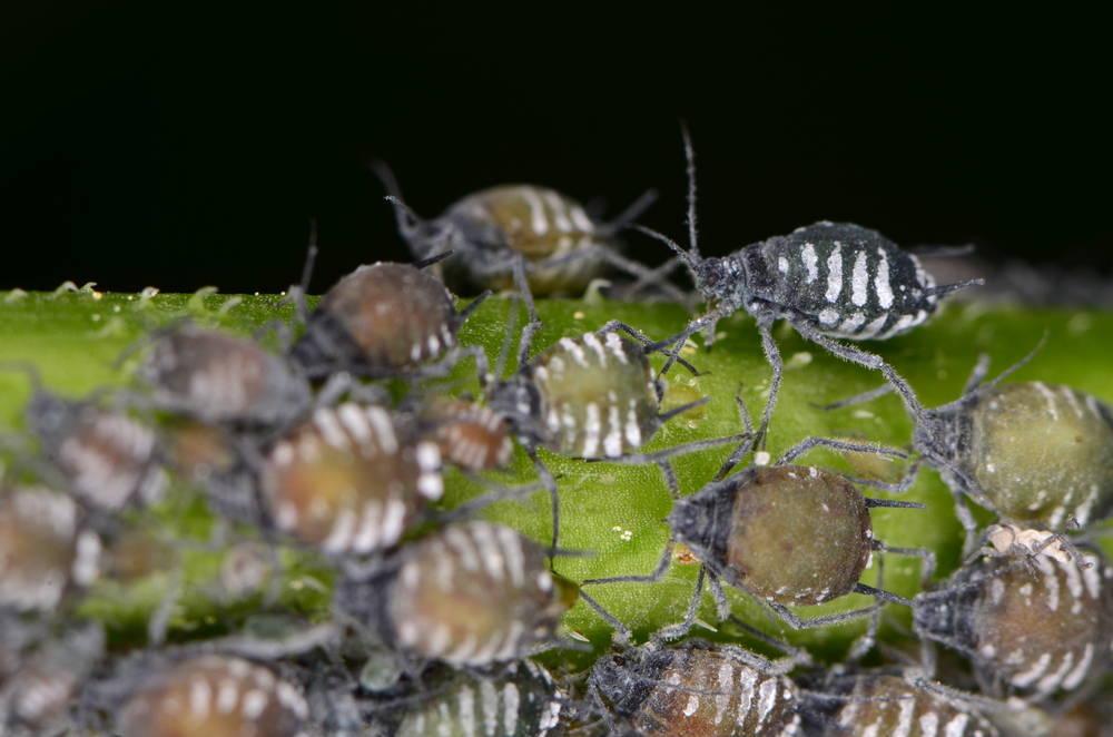 Una vieja amenaza para tu negocio: las plagas de insectos