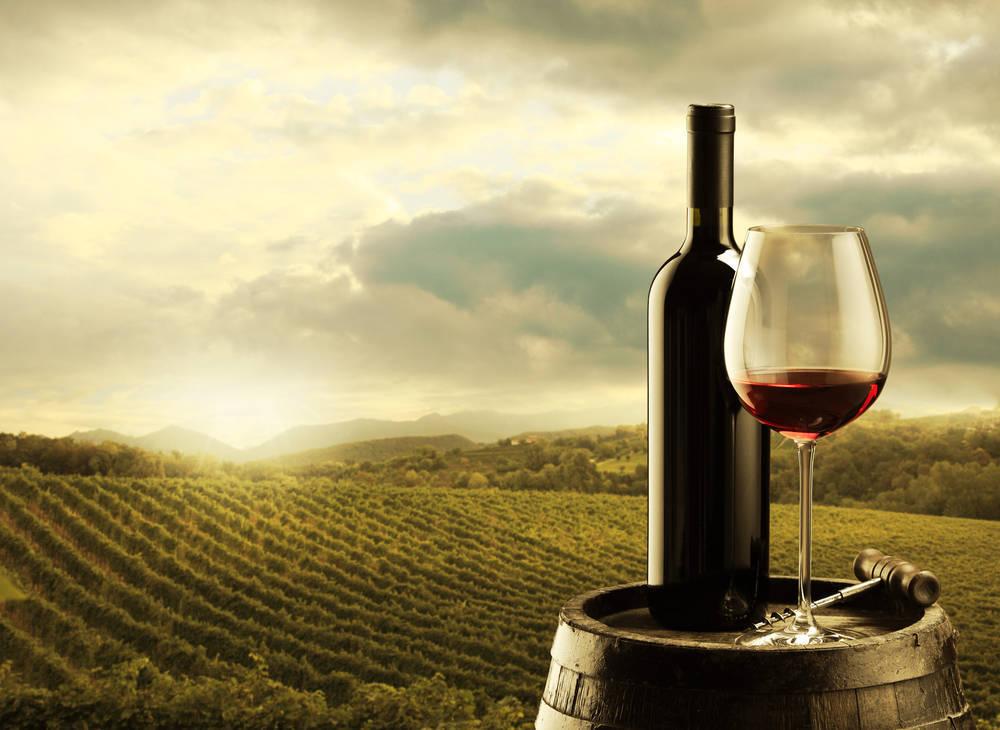 Dónde comprar las mejores máquinas y accesorios para el cultivo de vino